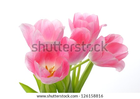beautiful pink tulips - stock photo