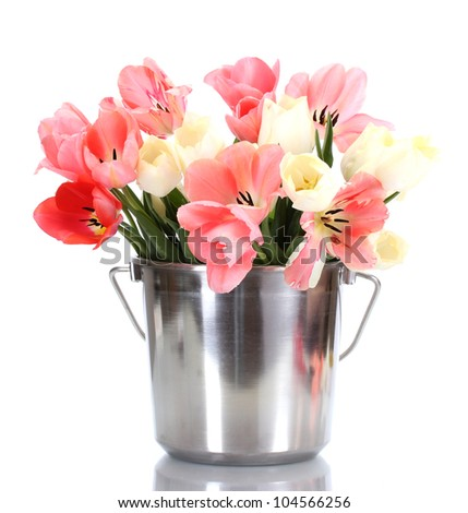 beautiful pink tulips in bucket isolated on white - stock photo
