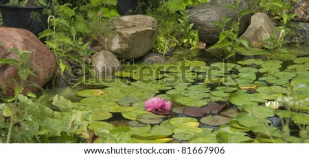 beautiful pink waterlily floating in a pond - stock photo