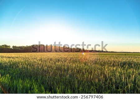 Beautiful plants in a field at sunset