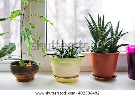 Beautiful plants  in flowerpots on windowsill at home. - stock photo
