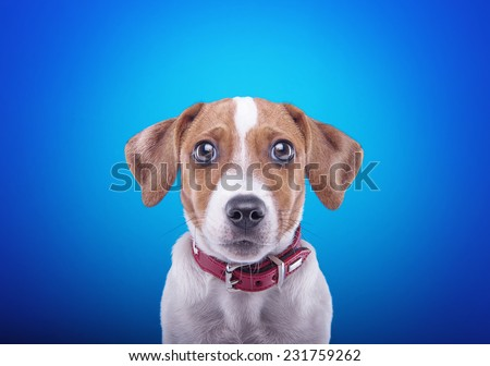 Beautiful playful dog on a blue background. Collection of animals - stock photo