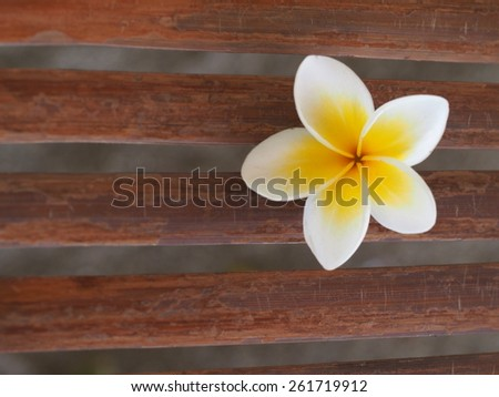 Beautiful plumeria flower on bamboo bench - stock photo