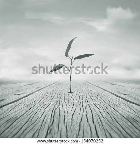 Beautiful poetic black and white image representing a little branch with leaves that grew escaping from a hole in the floor and cloudy sky in the background - stock photo