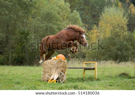 Beautiful pony mare jumps over a hurdle in the autumn landscape