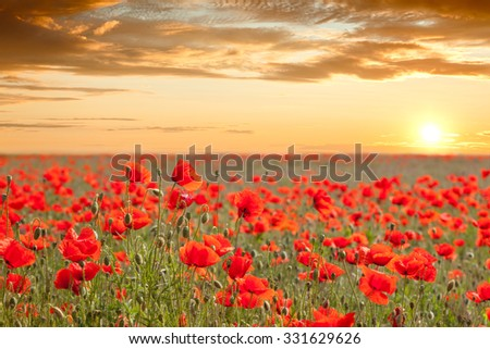 Beautiful poppy field landscape with golden sky, sun and clouds - sundown time - stock photo