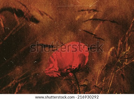 beautiful poppy on an old grungy vintage paper  - stock photo