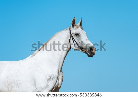 Beautiful portrait of a white horse on a background of the dark blue sky