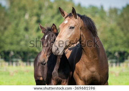 Beautiful portrait of mare with a foal in summer - stock photo