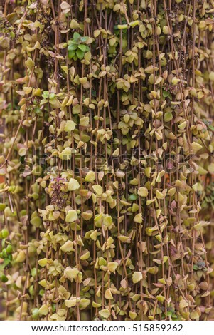 Beautiful potted coleus plants background