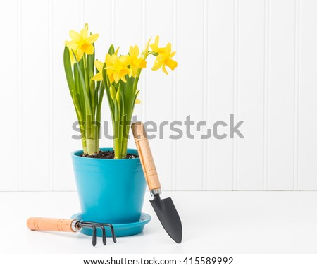 Beautiful potted spring daffodils with small garden tools. - stock photo