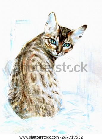 Beautiful purebred cat with leopard rare color, with character and expressive blue eyes. Graphics colored pencils on paper - hand illustration, drawing. - stock photo