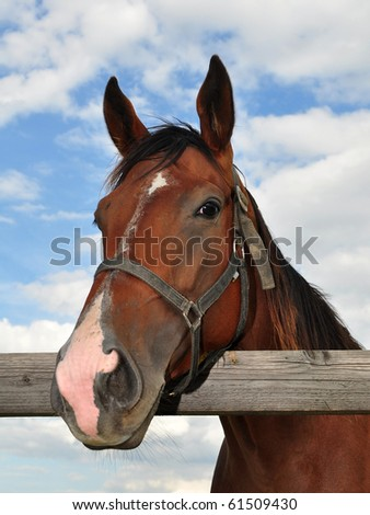 beautiful purebred horse - stock photo