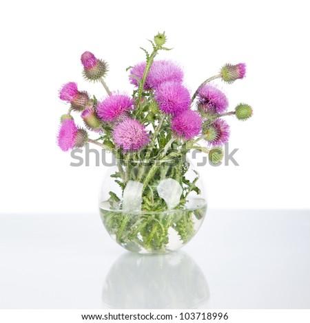 beautiful purple burdock wild flowers in vase isolated on white - stock photo