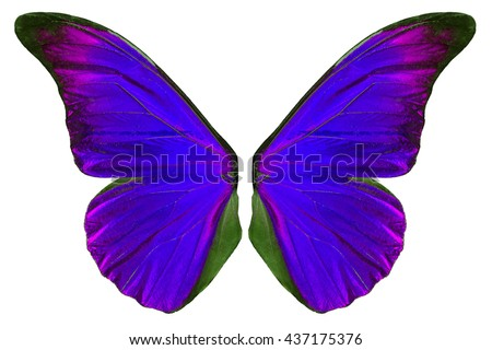 Beautiful purple butterfly wings isolated on white background. - stock photo