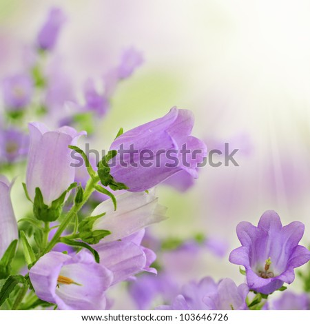 Beautiful purple flowers in spring summer garden on blurry bokeh background - stock photo