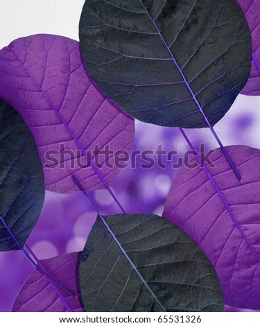 beautiful purple leaves on glowed background - stock photo