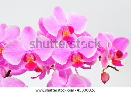Beautiful purple orchid against a white background - stock photo