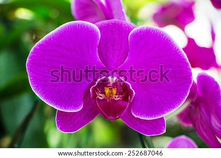 Beautiful purple orchid flowers