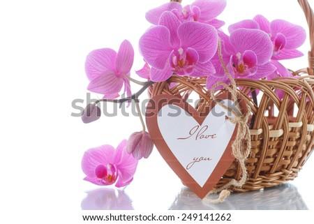 Beautiful purple phalaenopsis flowers on a white background - stock photo