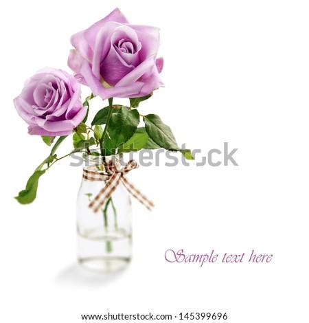 Beautiful purple rose on white background - stock photo