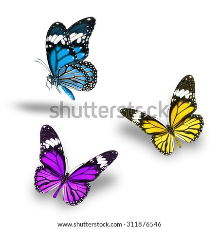 Beautiful Purple Yellow Light Blue butterfly flying up