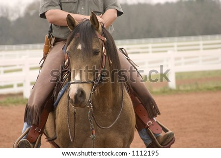 Beautiful Quarter Horse stallion under saddle