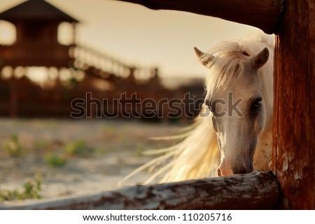 beautiful, quiet, white horse waits in paddock - stock photo