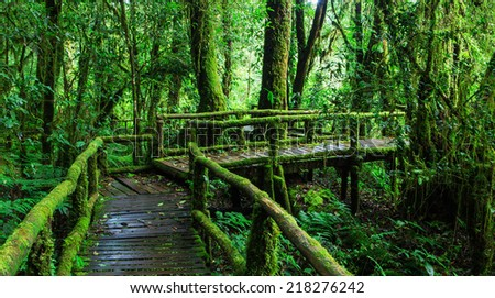 Beautiful rain forest at ang ka nature trail in doi inthanon national park, Thailand - stock photo