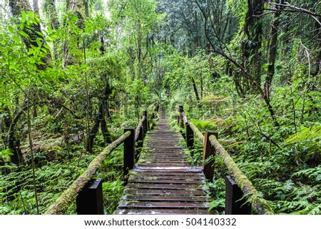 Beautiful rain forest at Angka nature trail in Doi Inthanon national park, Thailand