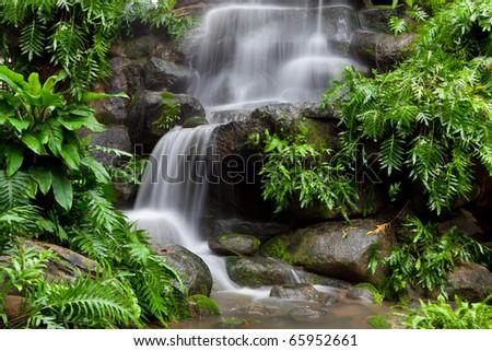 Beautiful rain forest at doi - stock photo
