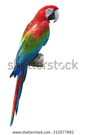 beautiful red and green macaw isolated on white background - stock photo