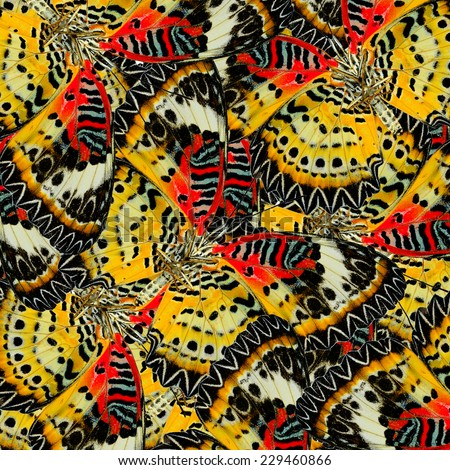 Beautiful Red and Yellow Background Texture made of Leopard Lacewing Butterflies - stock photo