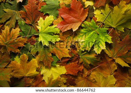 Beautiful red and yellow leaves as an autumn background - stock photo