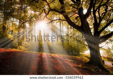 Beautiful Red Autumn leaves on the ground, Sunlight breaking through a gap in the trees in a wooded area/woods/forest - stock photo