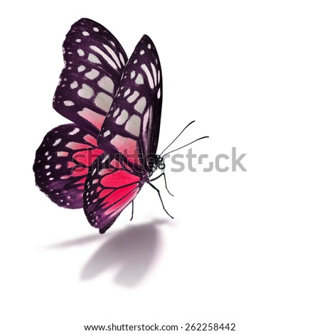 Beautiful red butterfly isolated on white background.