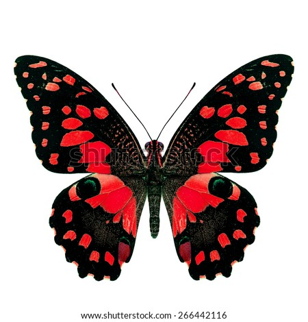Beautiful red butterfly, Papilio demoleus Linnaeus in fancy color profile isolated on white background, soft focus - stock photo