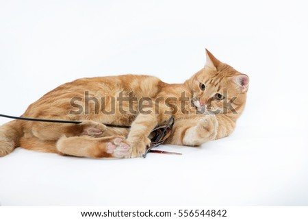Beautiful red cat with ginger eyes posing with a toy while lying on a white background closeup