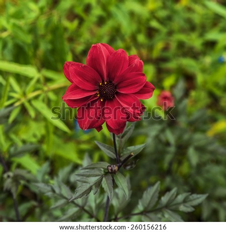 Beautiful red flowers in Hyde Park - stock photo