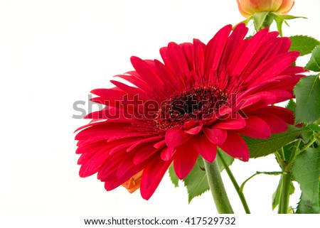 Beautiful red gerbera flower isolated on white background / Ogange yellow roses bouquet isolated on white background / New set