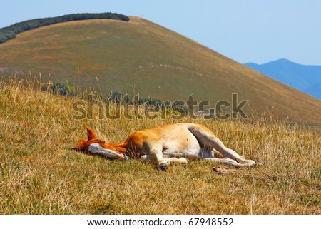 Beautiful red horses taken in Italian mountains - the Apennines - stock photo