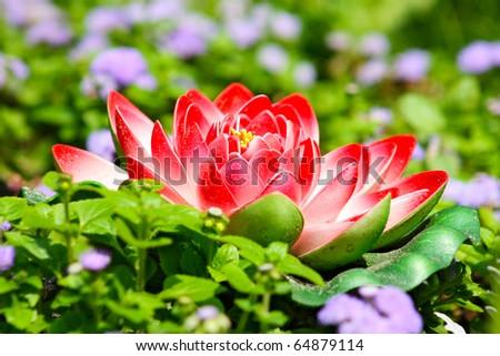 beautiful red lotus flower taken in Kiev in summer - stock photo