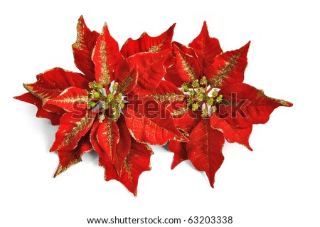 beautiful red poinsettia isolated on a white background. - stock photo