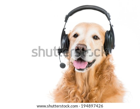 beautiful red retriever with headset isoleted on a white background - stock photo