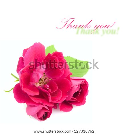 Beautiful  Red Rose Flowers with leaves isolated on white background with copy space
