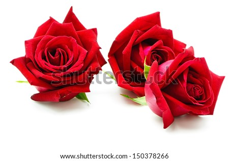 Beautiful red rose isolated on white - stock photo