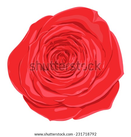 beautiful red rose isolated on white background. Hand-drawn. Design element for decorating greeting cards and invitations to the wedding, birthday. additional format in the profile of the artist - stock photo