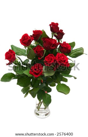 Beautiful red rose on a white background - stock photo