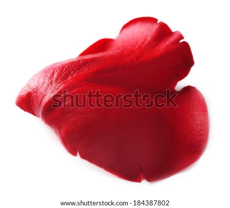 Beautiful red rose petal, isolated on white - stock photo