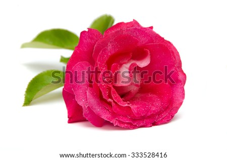 beautiful red rose with drop water isolated on a white